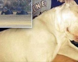 Pit Bull Who Saved Little Boy And Bit Mom Who Threw Him Into River Learns His Fate
