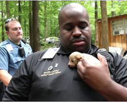 Cops Rescue 526 Puppies From A Monster. One Year Later, The Rescue Dogs Reunite