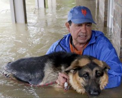 For these owners, saving their pets during Hurricane Harvey was paramount. The photos say it all