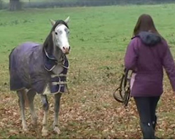 She's Been Away For Weeks. Now watch The Horse's Reaction When He Sees Her. Cute!