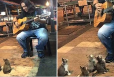 This Street Musician Was About To Call It Quits… But Then These Kittens Showed Up And Did This.