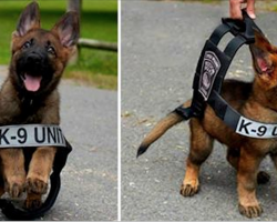 30 adorable photos of puppies taken on their first day at work that are sure to make you smile