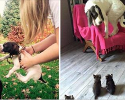 30 hilarious dogs that might look intimidating but are secretly fraidy cats