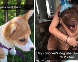 Try not to laugh at these 31 hysterical dog snapchats. It's nearly impossible!