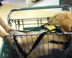 Proof That Puppies Can Sleep Just About Anywhere