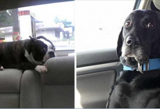 33 Pets Who Just Realized With Horror That They're Headed To The Vet