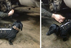 This Tool-Dog Is An Auto Mechanic's Best Friend. He Helps Humans Fix Cars!