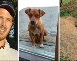 Groom Cooks Bacon In Cabin. When A Stray Dog Appears, She Leads Bachelor Party To Her Puppies…