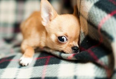 "15 Signs Your Dog Might Actually Be Your ""Baby"""