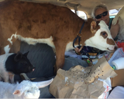 After a major earthquake, woman fills her van with animals and takes them to safety