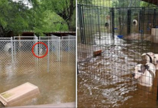 Animal Rescue Pleas Public For Help To Save Trapped Animals During Hurricane Harvey