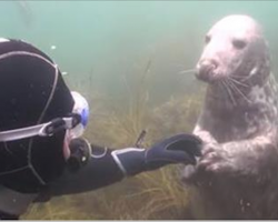 Diver doesn't understand what seals wants — when he stretches out his hand, I can't stop laughing