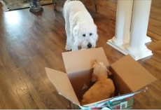 Dog Gets A Puppy For His Birthday – Now Watch When He Gets Closer To Her. Oh MY!
