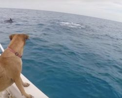 Dog Sees Dolphins For The First Time … And Decides To Become One