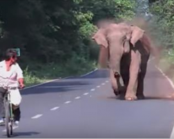 Elephant Ferociously Charges Man On Bike, The Reason Becomes Obvious Once She Lifts Her Trunk