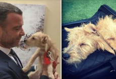 Liev Schreiber Visits Hurricane Harvey Dogs Backstage And Adopts Two On The Spot
