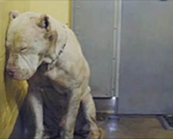 They Called Him A MONSTER – Until She Looked In His Eyes And Saw THIS!