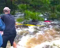 Man Spots Dog Clinging To Tree In Rushing Water, Ties Yellow Rope To Waist And Swims Out To Help