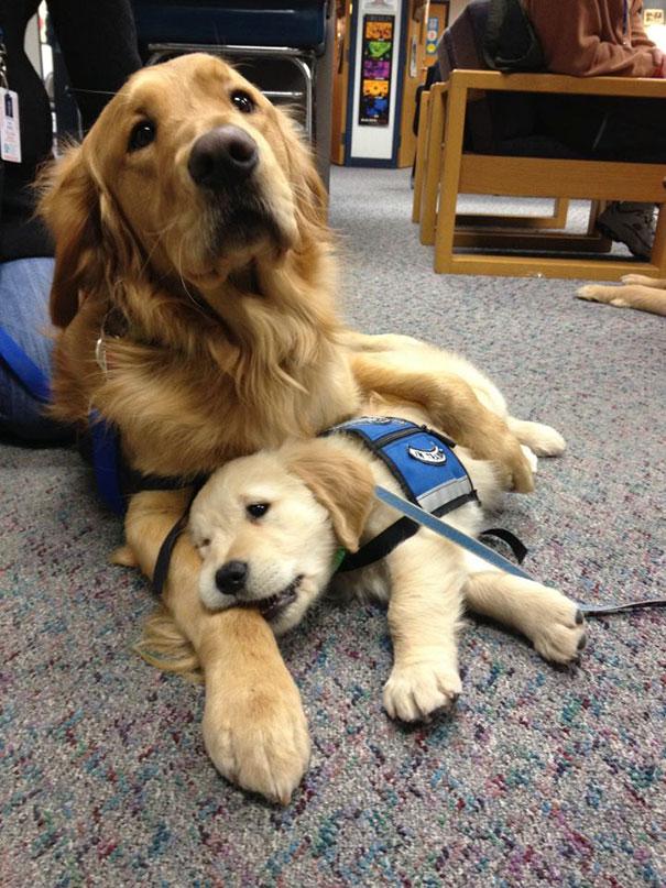 Even The Comfort Puppy Needs Some Comfort