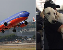 Southwest Packs Plane With Pets Displaced By Harvey For Cutest Rescue Mission.