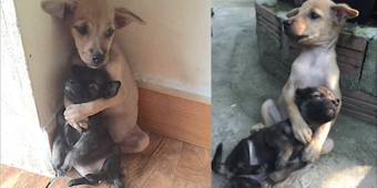 Even after being rescued, two abandoned puppies won't stop hugging each other
