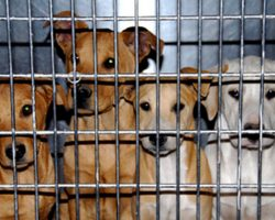 California Just Became The First State To Require Pet Stores To Sell Only Rescue Animals