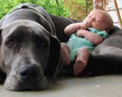 26 photos that prove dogs love children unconditionally