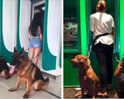 10+ Reasons Why Dogs Are The Best Defense Against Thieves At The ATM