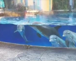 5 Curious Dolphins Mimicking Squirrels Shows Just How Smart These Creatures Are