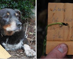 Family Is Worried When Dog Disappears, Then He Returns With Note Calling Him 'Hero Of The Day'