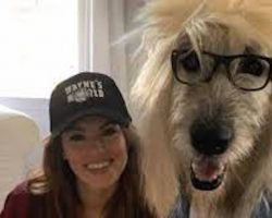 Irish Wolfhound And His Mom's Rockin' Halloween Costumes Win The Internet