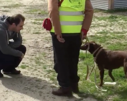 Lost Dog's In Disbelief When She Sees Her Owner — Then She Smells Him