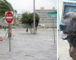 Mistaken For A Stray and Evacuated From Florida, All Hope Seemed Lost For This Grieving Pooch Until..