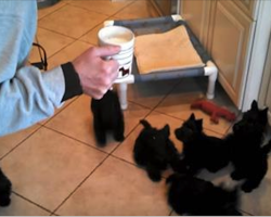 Mom Called Her Puppies For Dinner, Now Watch Their Hilarious Reaction! Oh My!