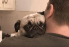 (VIDEO) Dad Asks His Pug for a Hug. His Response? PRICELESS!