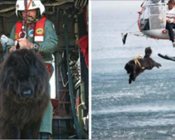 Rescue Dog Throws Himself From Helicopter Into Giant Waves To Save Lives