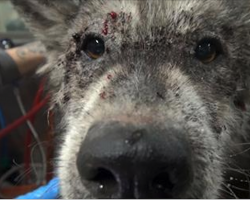 Vet Rushes To Save This Starving Dog, Then Makes Shocking Discovery