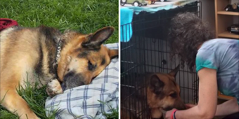 Dying Dog With Tumor Gets Special Delivery And Second Chance, Owners Are In Awe