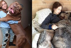 20 Big Dogs Who Really Don't Know How Big They Are