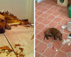 10+ Hilarious Times Dogs Were Caught Red Handed And Couldn't Hide Their Guilt