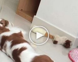 An Exhausted Dog Momma Was Sleeping Near Her Puppies When She Got An Adorable Interruption