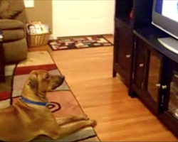 Dad catches the dog responding to commands on the TV, and it's hilarious