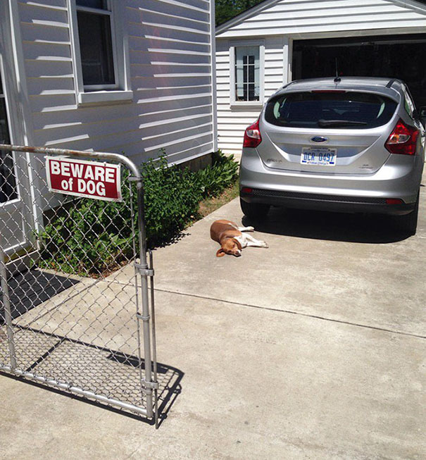 10 Dangerous Dogs Behind Beware Of Dog Signs