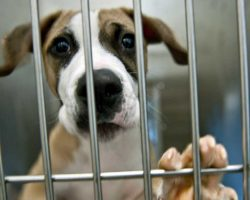 California Becomes The First State To Require Shelters To Sell Rescue Animals