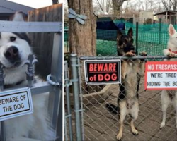 "10+ ""Dangerous Dogs"" Behind ""Beware Of Dog"" Signs"