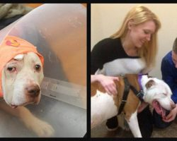 Deaf Dog Who Took A Bullet For His Owner Is Finally No Longer Homeless