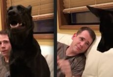 Dad 'Boops' His Dog's Nose But Is Taken By Surprise By What His Dog Does Back