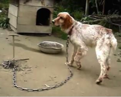 Dog was chained up for 5 Years – Now watch his reaction when they free him!
