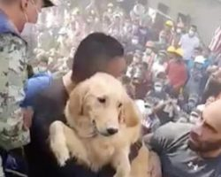 Golden Retriever Pulled Alive From The Rubble Of Deadly Earthquake