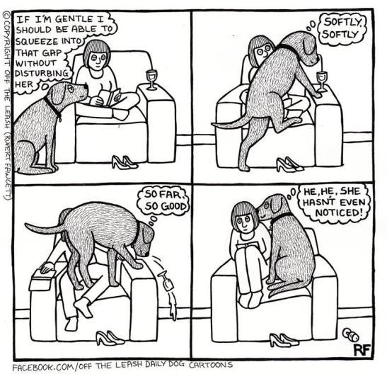 dog_owners_understand_3